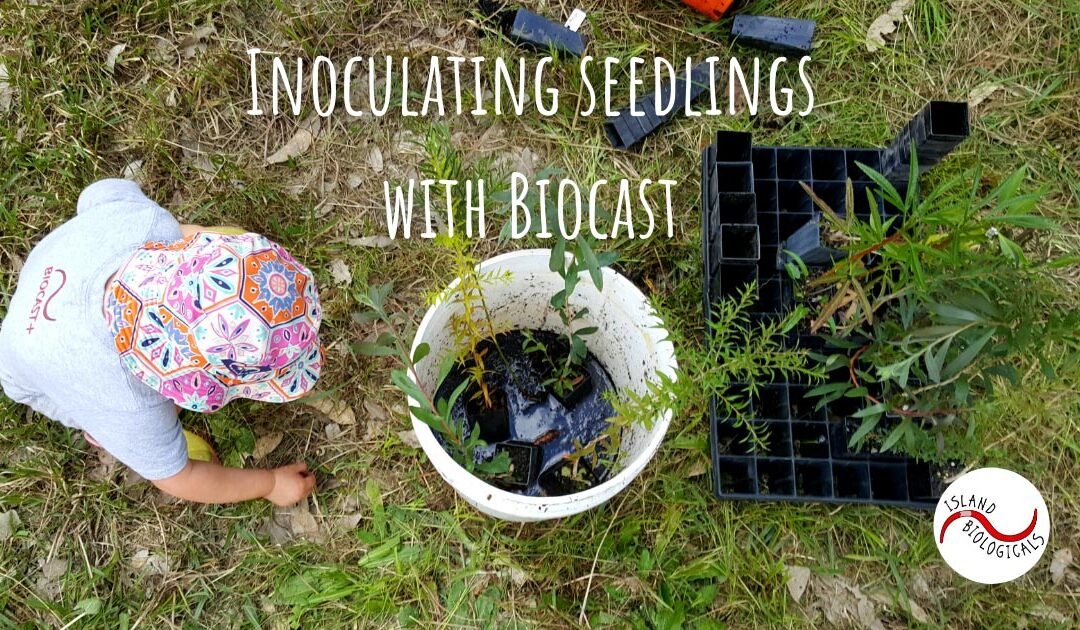 Inoculating seedlings with Biocast